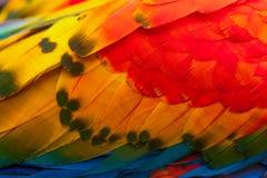 Φτερά Macaw Ara Στοκ Εικόνα
