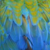 Φτερά Macaw Harlequin Στοκ εικόνες με δικαίωμα ελεύθερης χρήσης