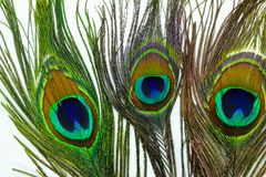 Φτερά Peacock στο άσπρο υπόβαθρο στοκ φωτογραφία με δικαίωμα ελεύθερης χρήσης