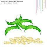 Φτερωτή βιταμίνη Beanswith B1 και βιταμίνη B2 Στοκ φωτογραφίες με δικαίωμα ελεύθερης χρήσης