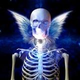 Φτερωτός σκελετός ελεύθερη απεικόνιση δικαιώματος