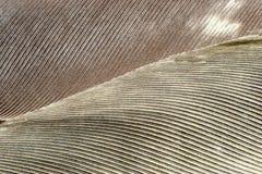 φτερό ανασκόπησης γκρίζο Στοκ Φωτογραφίες