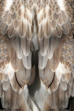 φτερό ανασκόπησης Στοκ φωτογραφία με δικαίωμα ελεύθερης χρήσης