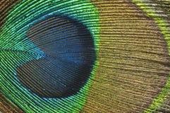 φτερό ανασκόπησης peacock Στοκ φωτογραφίες με δικαίωμα ελεύθερης χρήσης