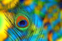 φτερό ανασκόπησης peacock Στοκ εικόνα με δικαίωμα ελεύθερης χρήσης