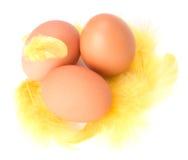 φτερό αυγών Στοκ Φωτογραφία