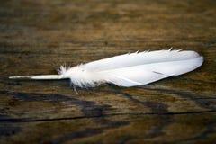 Φτερό και μια ξύλινη δομή Στοκ Φωτογραφίες