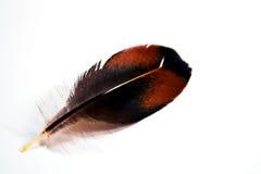 φτερό κοτόπουλου Στοκ φωτογραφία με δικαίωμα ελεύθερης χρήσης
