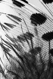 Φτερό κοτών της Γουινέας Στοκ Εικόνες