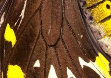 φτερό λεπτομέρειας πετα&la Στοκ Εικόνες