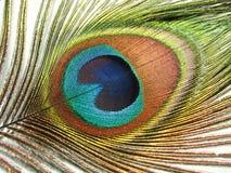φτερό λεπτομέρειας peacock Στοκ Εικόνες