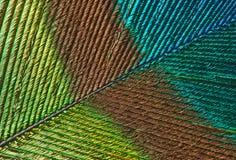 φτερό λεπτομέρειας peacock Στοκ φωτογραφία με δικαίωμα ελεύθερης χρήσης