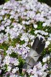 Φτερό μεταξύ των λουλουδιών Στοκ φωτογραφία με δικαίωμα ελεύθερης χρήσης