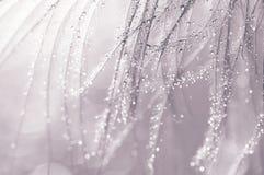 Φτερό με το ασήμι σταγονίδιων νερού Όμορφη μακροεντολή με τα φτερά Στοκ Εικόνες