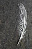 φτερό παραλιών Στοκ εικόνες με δικαίωμα ελεύθερης χρήσης