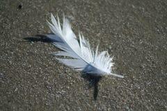 φτερό παραλιών στοκ φωτογραφία με δικαίωμα ελεύθερης χρήσης