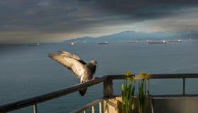 Φτερό περιστεριών στον ήλιο στοκ εικόνα με δικαίωμα ελεύθερης χρήσης