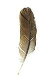 φτερό πουλιών s Στοκ φωτογραφία με δικαίωμα ελεύθερης χρήσης