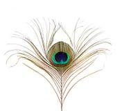 φτερό που απομονώνεται peacock Στοκ Φωτογραφία