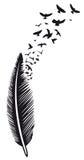 Φτερό, πουλιά Στοκ Φωτογραφία
