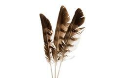 Φτερό πουλιών που απομονώνεται Στοκ φωτογραφίες με δικαίωμα ελεύθερης χρήσης