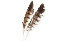 Φτερό πουλιών που απομονώνεται Στοκ φωτογραφία με δικαίωμα ελεύθερης χρήσης