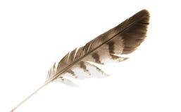 Φτερό πουλιών που απομονώνεται Στοκ εικόνες με δικαίωμα ελεύθερης χρήσης