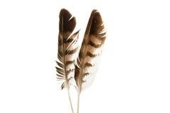 Φτερό πουλιών που απομονώνεται Στοκ Φωτογραφίες