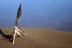 Φτερό που κολλιέται στην άμμο στην παραλία στοκ εικόνες