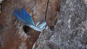 Φτερό που κολλιέται μπλε στο ξύλο Στοκ φωτογραφία με δικαίωμα ελεύθερης χρήσης