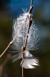 φτερό που χάνεται Στοκ Εικόνες