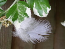 φτερό που χάνεται Στοκ Φωτογραφία