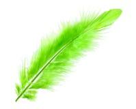 φτερό πράσινο στοκ εικόνες