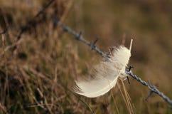 Φτερό σε έναν φράκτη Στοκ Εικόνα