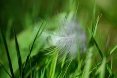 Φτερό σε μια πράσινη χλόη Στοκ φωτογραφίες με δικαίωμα ελεύθερης χρήσης