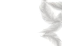 Φτερό στην άσπρη ανασκόπηση Στοκ Εικόνα