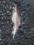 Φτερό στην ακτή Στοκ Εικόνες