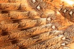 Φτερό της κουκουβάγιας σιταποθηκών Στοκ Εικόνα