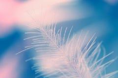 Φτερό του Κύκνου Στοκ Φωτογραφίες