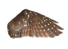 Φτερό του πουλιού στοκ εικόνα