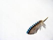 φτερό τυχερό Στοκ Εικόνα