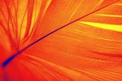 φτερό Φοίνικας Στοκ φωτογραφία με δικαίωμα ελεύθερης χρήσης