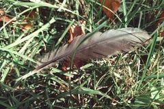 Φτερό στοκ φωτογραφίες
