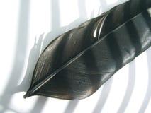 φτερό Στοκ φωτογραφία με δικαίωμα ελεύθερης χρήσης