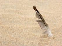 φτερό Στοκ εικόνα με δικαίωμα ελεύθερης χρήσης