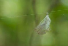 Φτερό στοκ εικόνες