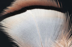 Φτερό στοκ εικόνες με δικαίωμα ελεύθερης χρήσης