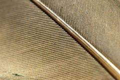 Φτερό Στοκ Εικόνα