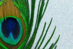 Φτερό Peacock στο ασημένιο λαμπρό υπόβαθρο στοκ εικόνες με δικαίωμα ελεύθερης χρήσης