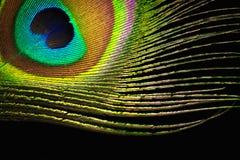 Φτερό Peacock στο μαύρο υπόβαθρο Στοκ Φωτογραφίες